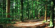 中国-东盟林业合作取得新进展