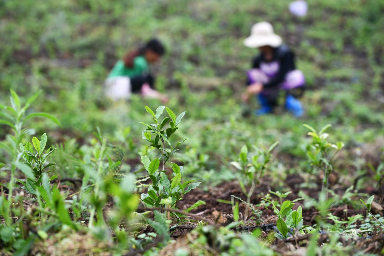 说明: 中国农村扶贫经验助力东盟农村地区减贫脱困