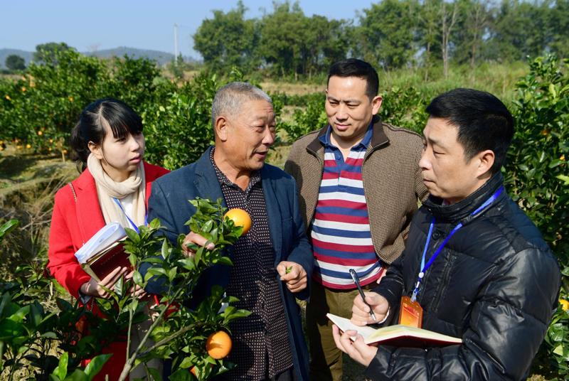 说明: 中国柑橘种植技术出海东南亚,助力东南亚国家减贫事业